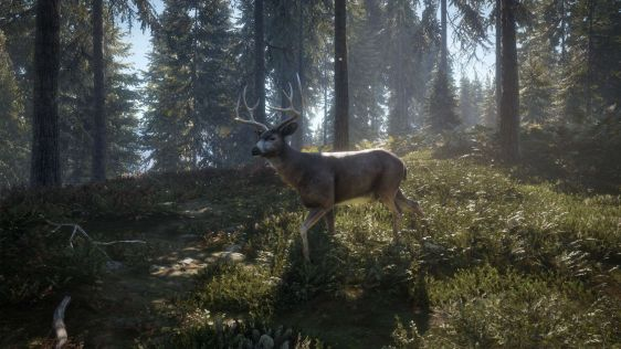 Zwierzyna jezcze żyje w theHunter: Call of the Wild