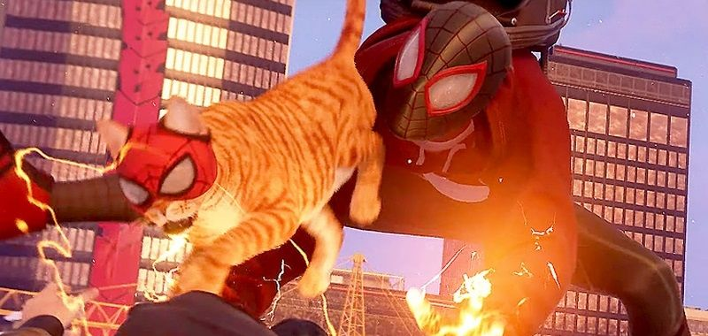 Spider-Man Spider-Cat